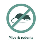 icon_mice_and_rodent